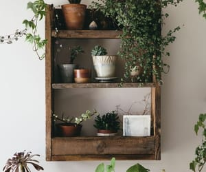 plants, aesthetic, and decor image