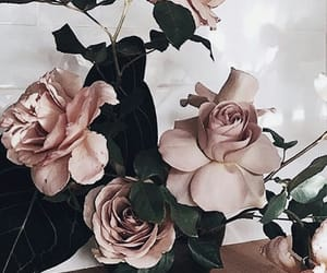 flowers, rosy, and pink image