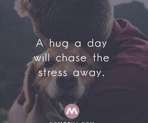 dog, happiness, and health image