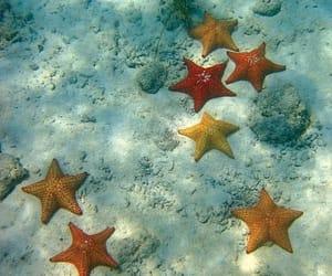 sea, starfish, and ocean image