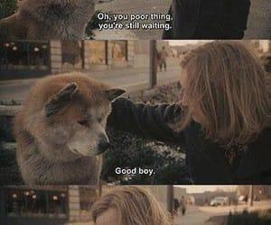 dog, hachi, and hachiko image