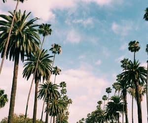 palms, beach, and palm tree image