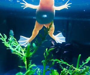 aquarium, frog, and grün image