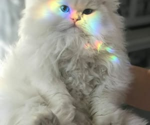 cat, furry, and rainbow image
