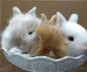 adorable, bunnies, and white image