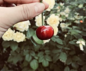 cherries, red, and love image