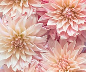 background, girly, and floral image