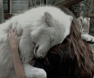 dog, wolf, and white image