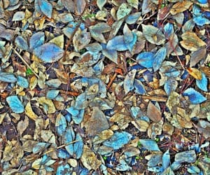 autumn, blue, and kurdistan image