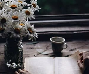 flowers, book, and chamomile image