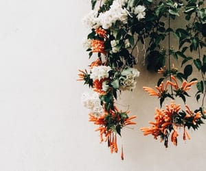 flowers, tropical, and orange image