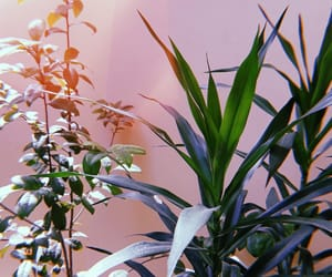 aesthetic, artsy, and plants image