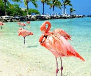 flamingo and beach image
