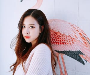 kpop, rose, and black pink image