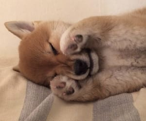 dog, paws, and puppy image