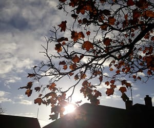 autumn, leaves, and sky image