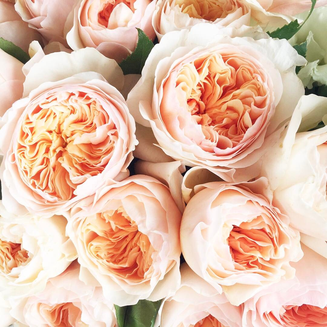 flowers, pattern, and peachy image