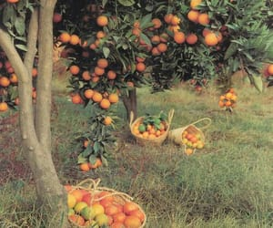 orange, tree, and fruit image