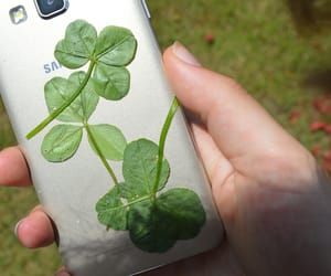 four leaf clover, nature, and phone image