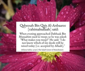 allah, hijab, and sunnah image