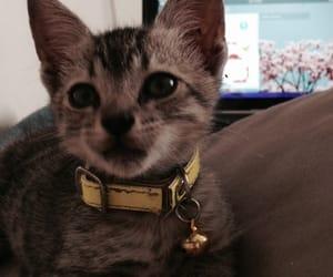 Animales, cat, and gatito image