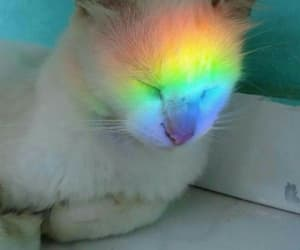 cat, rainbow, and kitty image
