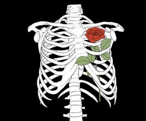 rose, wallpaper, and skeleton image