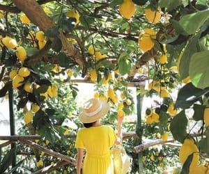 lemon, Amalfi, and italy image