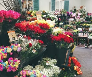 colorful, flowers, and store image