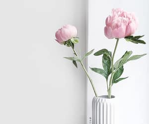 flowers, pink peonies, and minimalistic image