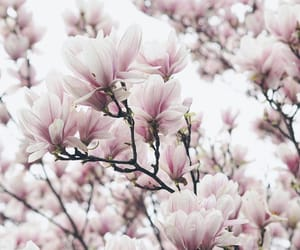beautiful, pink flowers, and floral image
