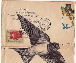 bird and Letter image