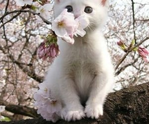 aesthetic, flowers, and cat image