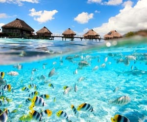 bora bora, summer, and tropical image