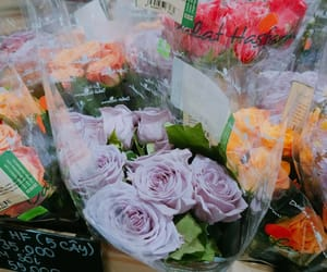 flowers, rose, and stuffy image