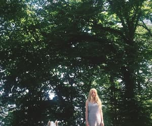 fold, iamamiwhoami, and forest image