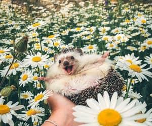 flowers, xoxo, and happy image