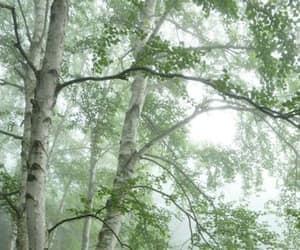 trees, bäume, and birken image