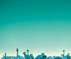 beautiful, turquoise, and flamingos image