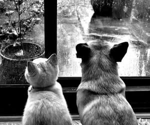 animals, black and white, and rain image