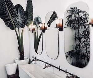 beauty, plants, and perfect image