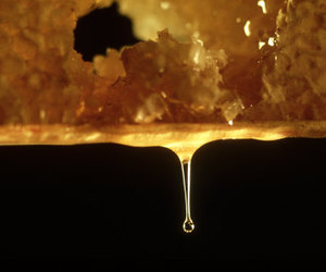 dripping and honey image