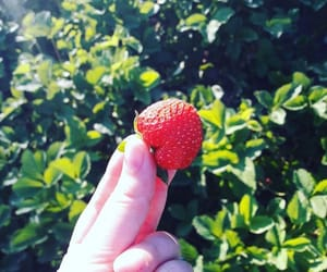 fruit, nature, and strawberry image