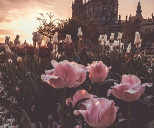 flowers, pink, and castle image
