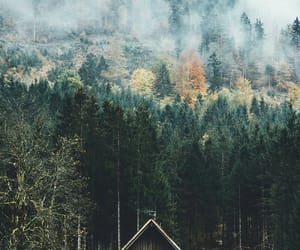 beauty, cabin, and colours image