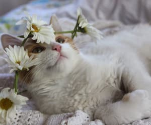 animals, cat, and flowers image