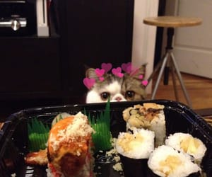 adorable, cat, and sushi image