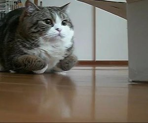 cat, funny, and hovercraft image