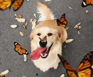 butterflies, dog, and happy image