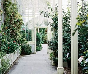 green, boarding school, and green house image